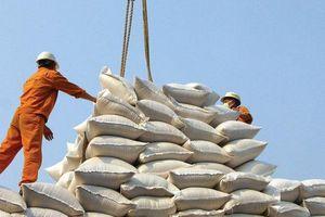 Giá gạo xuất khẩu tụt dốc, giá lúa trong nước rớt mạnh