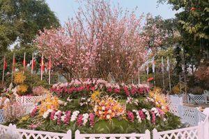Lễ hội hoa Anh đào sẽ tuyển chọn Đại sứ thiện chí hoa Anh đào
