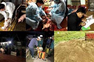 Cục Thú y 'đoán' nguyên nhân dịch tả lợn châu Phi vào sâu nội địa VN