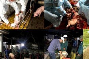 Lợn bị tiêu hủy do dịch tả lợn châu Phi được hỗ trợ bao nhiêu?