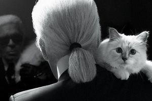 'Cô mèo' và những ai sẽ được hưởng tài sản của Karl Lagerfeld?