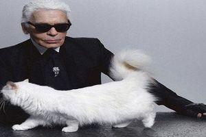 Karl Lagerfeld và tình yêu lớn nhất đời là chú mèo Choupette