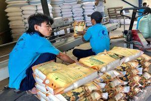 Các bộ ngành vào cuộc 'cứu' giá lúa gạo
