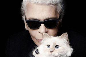 Nhận tài sản thừa kế từ NTK Karl Lagerfeld, Choupette sẽ là chú mèo giàu nhất thế giới