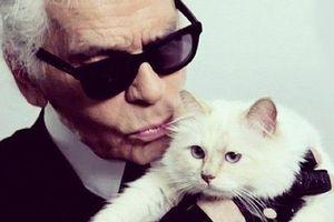 'Ông hoàng thời trang' Karl Lagerfeld để lại 200 triệu USD cho... mèo?