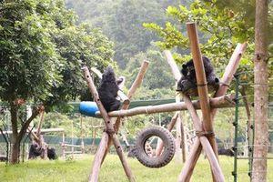 TP HCM: Cấm cán bộ tặng hay nhận quà liên quan đến động vật hoang dã