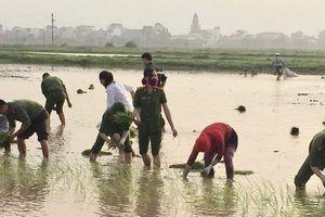 Tuổi trẻ ngành Công an giúp dân xuống đồng cấy lúa