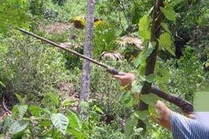 Bắn chết người khi đi săn gà rừng trên đồi