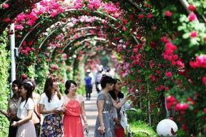 Chương trình 'Hoa hồng Bulgaria 2019' dự kiến diễn ra từ 2- 4/3, tại Hà Nội
