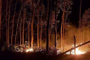 Đốt rẫy làm cháy 5 ha rừng