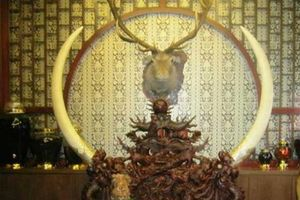 TP.HCM cấm cán bộ sử dụng, tặng, nhận động vật hoang dã