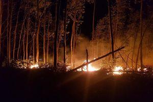 Hơn 5 ha rừng tràm bị thiêu rụi trong đêm tại Thừa Thiên Huế