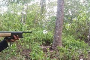 Nghi can bắn trúng bạn săn núp bụi cây giả tiếng gà rừng đối diện mức án nào?