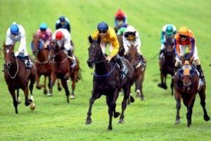 Nhà đầu tư Hàn Quốc muốn triển khai sớm trường đua ngựa tại Việt Nam