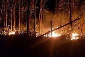 Làm rõ nguyên nhân vụ cháy thiêu rụi hơn 5 ha rừng tràm