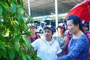 Lãnh đạo Hội Phụ nữ Campuchia thăm tổ trồng tiêu kết hợp du lịch ở Phú Quốc