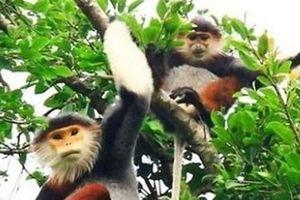 19 cá thể động vật hoang dã quý hiếm được cứu hộ