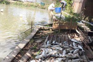 Làm rõ nguyên nhân 5 tấn cá tra chết bất thường