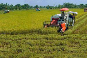 Ngành Công Thương địa phương chung sức tìm giải pháp cứu giá lúa gạo