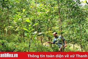 Lực lượng kiểm lâm với công tác bảo vệ rừng tận gốc theo hướng xã hội hóa