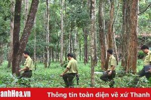 Ứng dụng khoa học, công nghệ nâng cao hiệu quả quản lý, bảo vệ và phát triển rừng