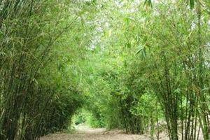 Nhà thơ Lê Quang Trang: Nghe sững sờ làn khói lá tre bay