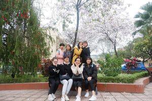 Sinh viên 'phát sốt' với hoa ban bung nở khắp sân trường