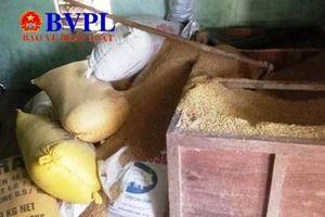 Nghi án người nông dân bị mất 49 cây vàng trị giá 1,8 tỉ đồng giấu trong đống lúa