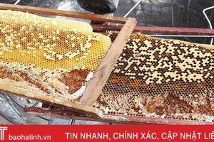 Thời tiết thuận lợi, mật ong Vũ Quang vào vụ thu hoạch sớm