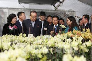 Đoàn Đảng Lao động Triều Tiên thăm mô hình trồng lan ở HTX Đan Hoài