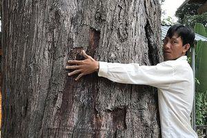 Chiêm ngưỡng 2 cây cổ thụ 'độc nhất' 3 người ôm không xuể ở Vĩnh Long