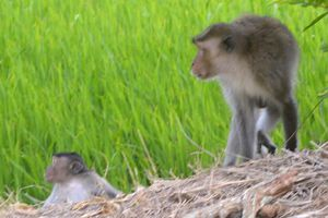 Bé trai bị khỉ hoang cắn phải khâu 10 mũi