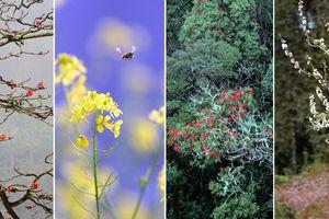 Mê mẩn sắc hoa tháng Giêng nơi miền biên viễn