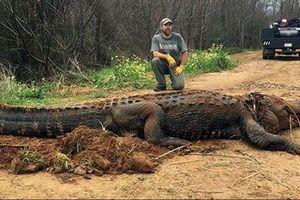 Cá sấu khổng lồ nằm chình ình giữa đường mòn nước Mỹ