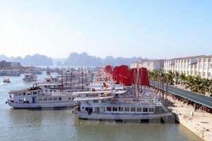 Thông tin về vụ du khách Nhật tử vong do ngã tại cảng Tuần Châu