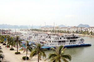 Du khách Nhật ngã tử vong tại Tuần Châu, Chủ tịch tỉnh Quảng Ninh chỉ đạo điều tra, làm rõ