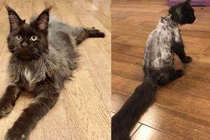 Chia sẻ bức ảnh Hari Won đang nằm với chú mèo cưng, Trấn Thành nói rằng 'nịnh lắm luôn á'