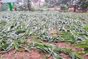 Lốc xoáy tại Nghệ An làm tốc mái 65 nhà dân