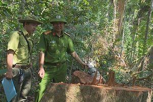 Điều tra vụ phá rừng quy mô lớn ở Đác Lắc