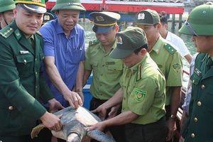 Hà Tĩnh: Thả cá thể rùa 'khủng' quý hiếm về với biển