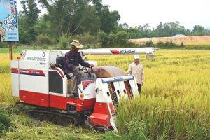 Quảng Nam: Sơ kết 3 năm thực hiện chương trình nông thôn mới