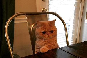 Mèo đã trở thành bá chủ thế giới qua loạt ảnh siêu ngầu này
