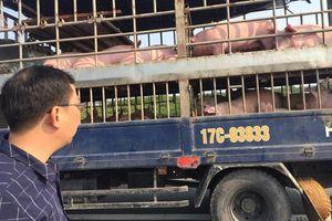 Hải Phòng: Các hộ dân nuôi lợn vùng dịch nhận tiền hỗ trợ