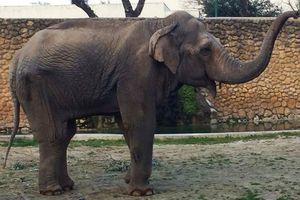 Con voi u sầu nhất thế giới qua đời