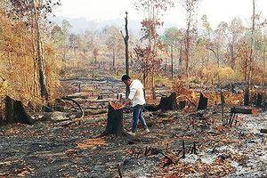 Liên tiếp xảy ra phá rừng lấy đất tại Gia Lai