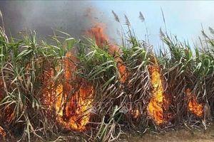 Gia Lai: Cháy lớn, thiêu rụi hơn 45 ha mía trong thời kỳ thu hoạch