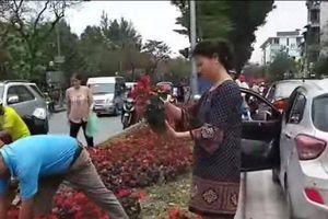 Người dân 'hôi' hoa trên đường Kim Mã: Biểu hiện của lòng tham, sự ích kỷ, ti tiện