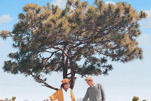8 cây cô đơn nổi tiếng được giới trẻ Việt 'săn lùng' nhiều nhất
