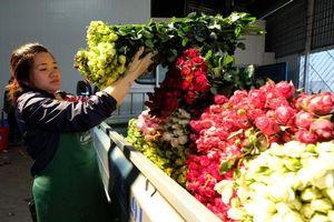 Quốc tế phụ nữ 8/3: Hoa hồng Đà Lạt tăng giá gấp 5 lần vẫn khan hàng không có để bán