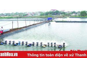 Huyện Hậu Lộc chủ động chuyển đổi diện tích sản xuất lúa sâu trũng và muối kém hiệu quả sang nuôi trồng thủy sản